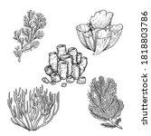 Hand Drawn Sketch Style Corals...