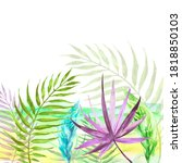Tropical Plants  Leaves  Wild...