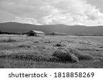 Fresh Cut Hay Field Late Summer ...
