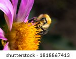 Yellow  Fluffy Bumblebee...