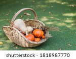 Basket Full Of Ripe Mini...