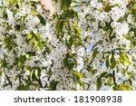 spring | Shutterstock . vector #181908938