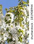 spring | Shutterstock . vector #181908944