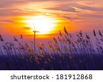 sunrise in blue over reed in a...   Shutterstock . vector #181912868