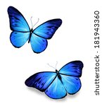 two blue butterflies on white | Shutterstock . vector #181943360