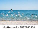 A Flock Of Seagulls Flies Low...