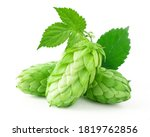 Bunch Of Hops Cones With Leaves....