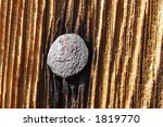 nail in the weather beaten wood | Shutterstock . vector #1819770
