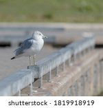 Seagull Standing On The Ledge