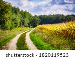 Dirt Road By The Cornfield In...