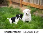 Stock photo two small fluffy puppies playing outside on green grass 182031119