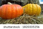 Huge Orange And Yellow Pumpkins ...