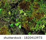 Green Moss On Rocks And Snake S ...