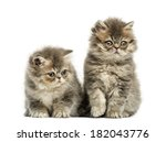 Stock photo persian kittens weeks old isolated on white 182043776