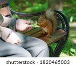 Feeding A Little Funny Squirrel ...