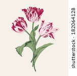 bouquet of three pink tulips on ... | Shutterstock .eps vector #182064128