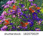 A Group Of Colorful Butterflies ...