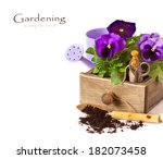 Beautiful Pansy flowers and gardening tools on a white background. - stock photo