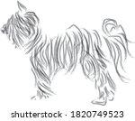 Black Dog  Yorkshire Terrier...