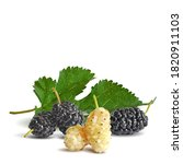 mulberry low poly. fresh ... | Shutterstock .eps vector #1820911103