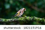 Colourful Wild Birds Living...