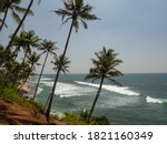 View Of Palm Trees And The...