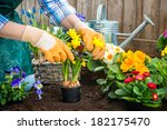 Gardeners Hands Planting...