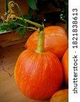 Close Up Of Single Pumpkin Wit...