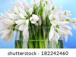 beautiful snowdrops on bright... | Shutterstock . vector #182242460