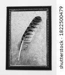 Feather Texture Background ...