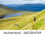 Woman Hiking Ben Nevis ...