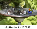 Group Of Finches In A Bird Bath