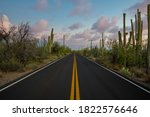 Beautiful Saguaro Cactus Along...