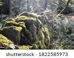 A Woodland Trail In Abergavenn...
