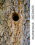 hollow for birds in a tree | Shutterstock . vector #18226420