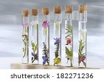Flowers In Test Tubes  On...