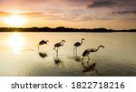 A Journey Of Flamingos Accross...