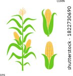 field with corn. isolated corn... | Shutterstock .eps vector #1822730690