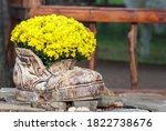 Crysanthemnum Plant Pot. Fall...
