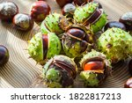 A Selective Focus On Conkers...