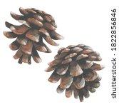 Two Pine Cones. Watercolor....