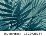Tropical Leaves  Abstract...