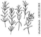 hand drawn spicy herbs.... | Shutterstock .eps vector #1823121383
