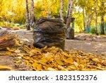 Autumn Yellow Leaves. Street...