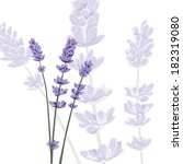 purple lavender on isolated... | Shutterstock .eps vector #182319080
