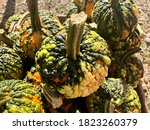 Warty Pumpkins Are A Hot Trend...