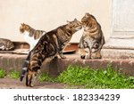 Cute Stray Cats Sniffing Each...