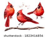 Red Birds Cardinal And Branch...