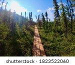 Alaska Hiking Trail Surrounded...