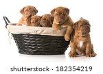 Litter Of Puppies In A Basket ...